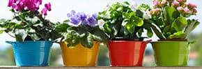 Цены на Горшки, кашпо для цветов и растений, фото