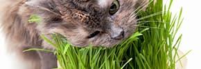Цены на Витамины и пищевые добавки для кошек, фото