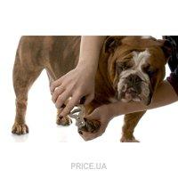 Фото Укорачивание когтей у собак