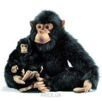 Фото Hansa Шимпанзе папа 65 см (2067)